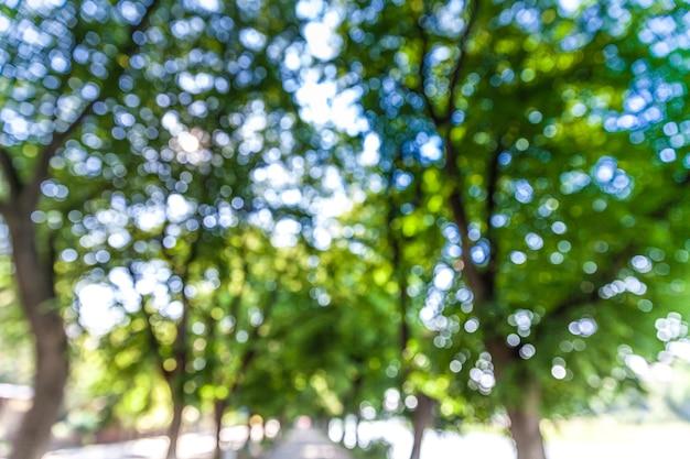 Unscharfes bild der straße mit bäumen und sonnenlicht