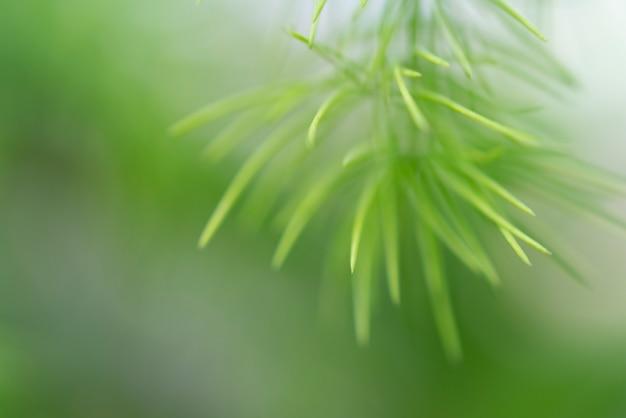 Unscharfes bild einer grünpflanze - der hintergrund für das schreiben des textes.