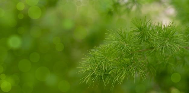 Unscharfes bild einer grünpflanze