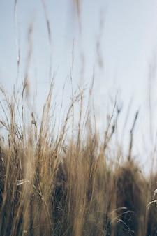 Unscharfes bild von gras