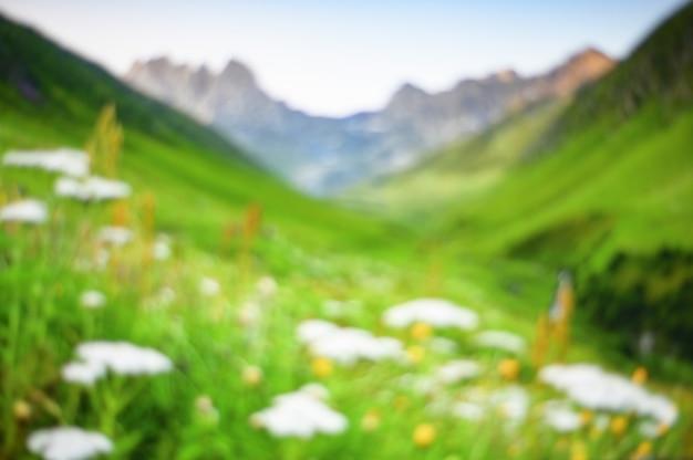 Unscharfes blumenfeld mit berg