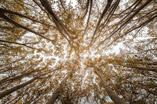 Untere perspektive von hohen waldbäumen