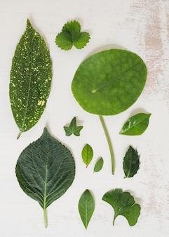 Unterschiedliche art von grünblättern auf schmutzhintergrund Kostenlose Fotos