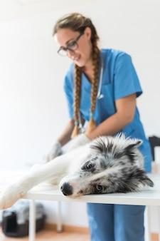 Untersuchungshund des weiblichen tierarztes, der auf tabelle in der klinik liegt