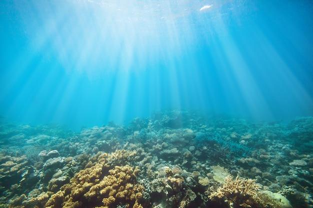 Unterwasser-korallenriff am roten meer
