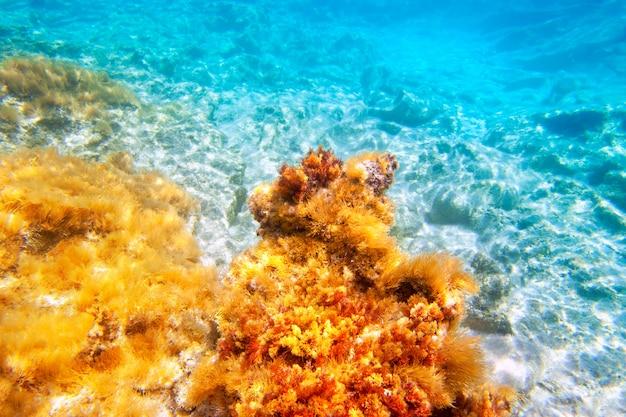 Unterwasser-meeresgrund der baearic islands
