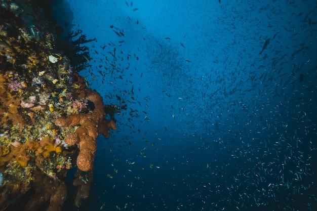 Unterwasser und tropische seenlandschaft