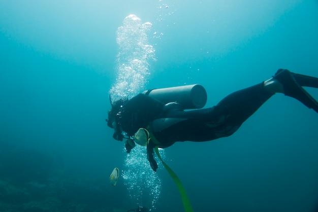 Unterwasseransicht eines sporttauchers, ixtapa, guerrero, mexiko