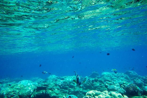 Unterwasserblauer ozeanhintergrund im tropischen strandmeer