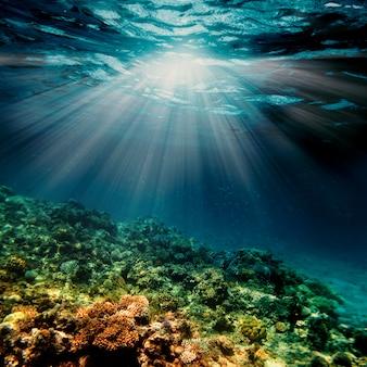 Unterwasserkorallenriff am roten meer