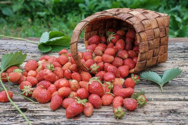 Unvorsichtig verstreute frische gartenerdbeeren auf einem holztisch in einem weidenkorb