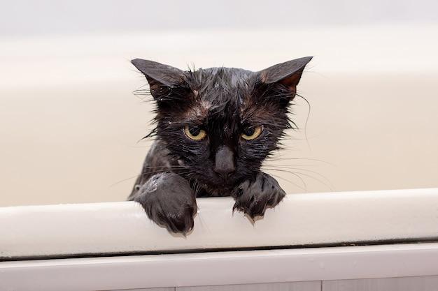 Unzufriedene nasse schwarze katze baden