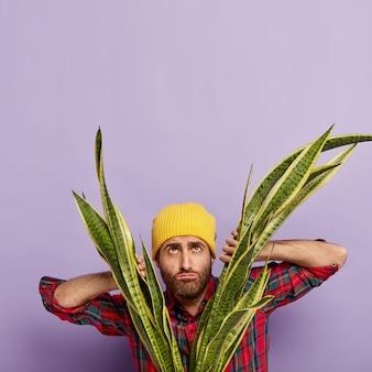 Unzufriedener gärtner, der mit einer großen topfschlangenpflanze aufwirft
