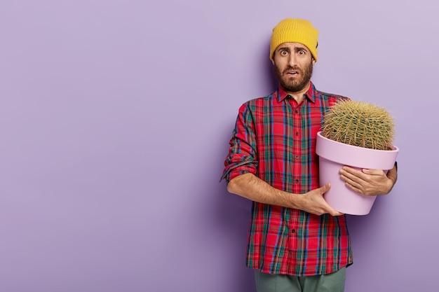 Unzufriedener junger männlicher botaniker hält großen topf kaktus, trägt kariertes hemd und gelben hut, hat keine lust auf zimmerpflanze, steht mit kopie an violetter wand