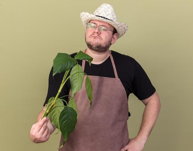 Unzufriedener junger männlicher gärtner, der gartenhut hält und pflanze hält hand auf hüfte lokalisiert auf olivgrüner wand hält