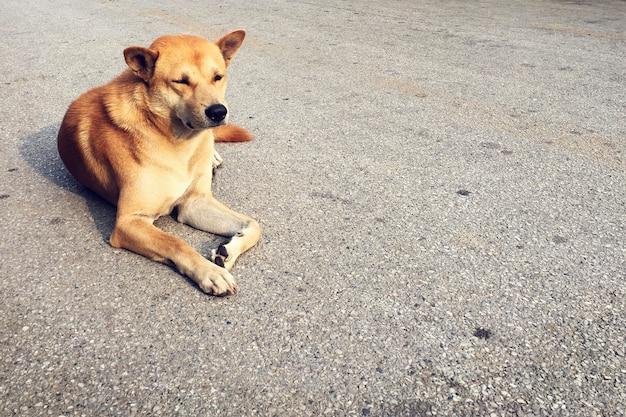 Urban city obdachloser hund einsam