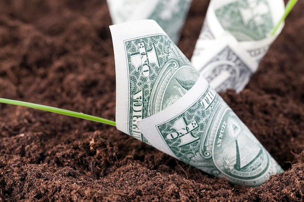 Us-dollar im boden eines landwirtschaftlichen feldes