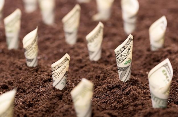 Us-dollar wachsen aus dem boden