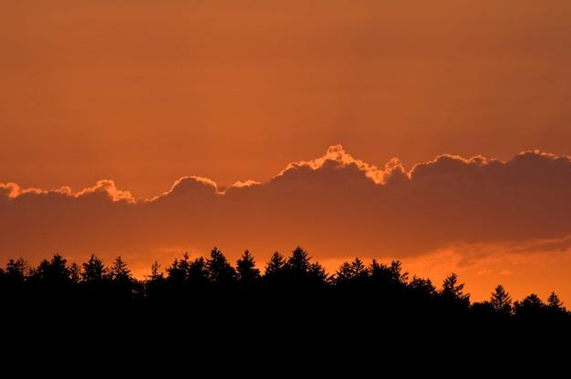 Vadnais lake regional park. schöner orangefarbener sonnenuntergang mit baumgrenze in der silhouette