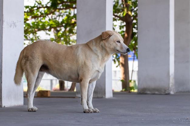 Vagrant hund, der draußen steht und kamera anstarrt. der hund, der den fotografen, den streunenden hund, den obdachlosen hund betrachtet