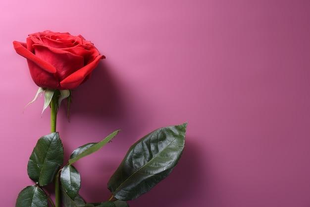Valentinstag hintergrundgrußkarte liebessymbole, rote dekoration mit rosen. draufsicht mit kopierraum und text. flache lage