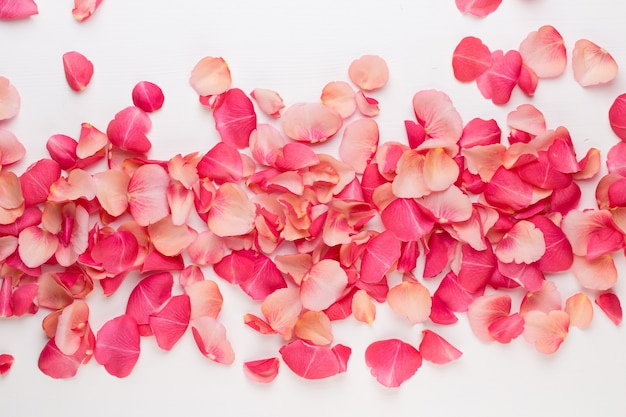 Valentinstag. rosenblütenblätter auf weißem hintergrund. valentinstag hintergrund. flache lage, draufsicht.
