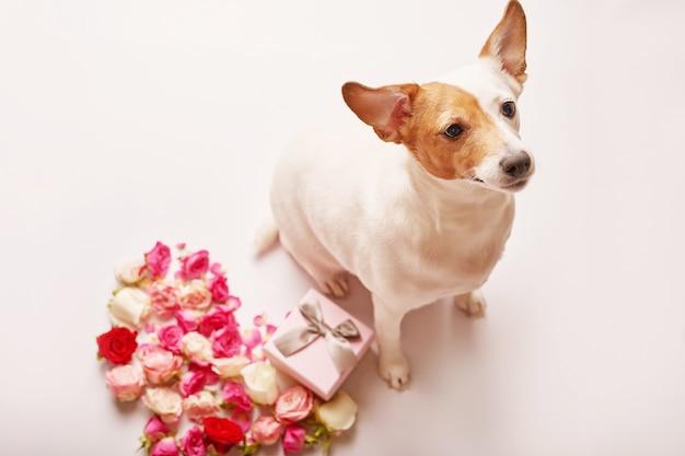 Valentinstagzusammensetzung mit hund und blumen.