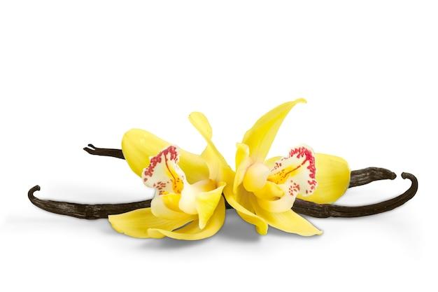 Vanilleschoten und orchideenblüten auf weißem hintergrund
