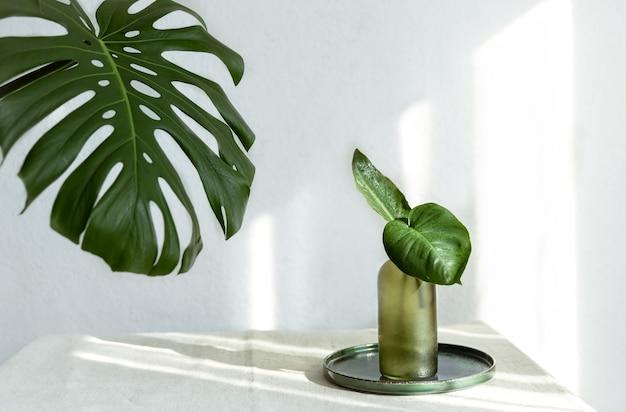 Vase mit natürlichen blättern und monstera-blatt im inneren des raumes.
