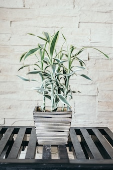 Vase pflanzenbaum