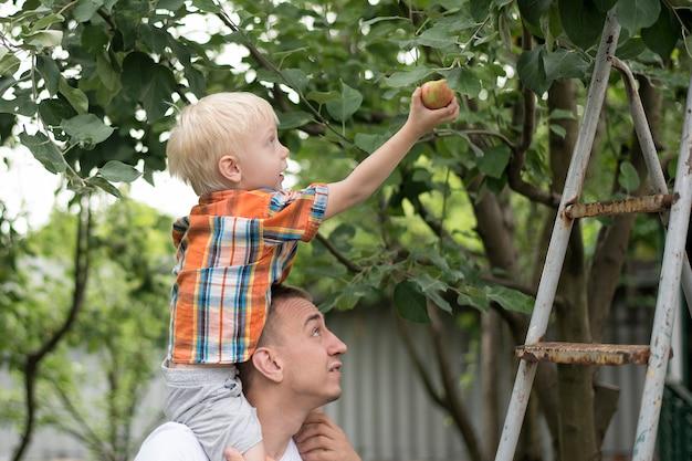 Vater und der kleine sohn ernten äpfel. garten im hintergrund