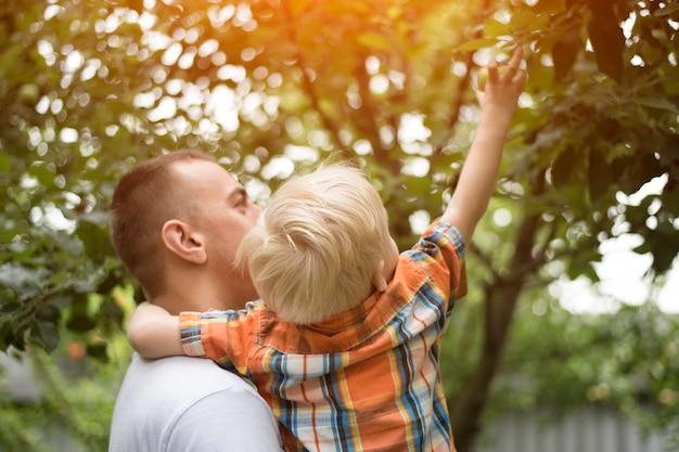 Vater und der kleine sohn ernten äpfel