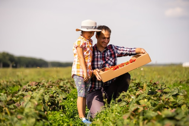 Vater und kind halten wild gepflückte erdbeeren im sommer