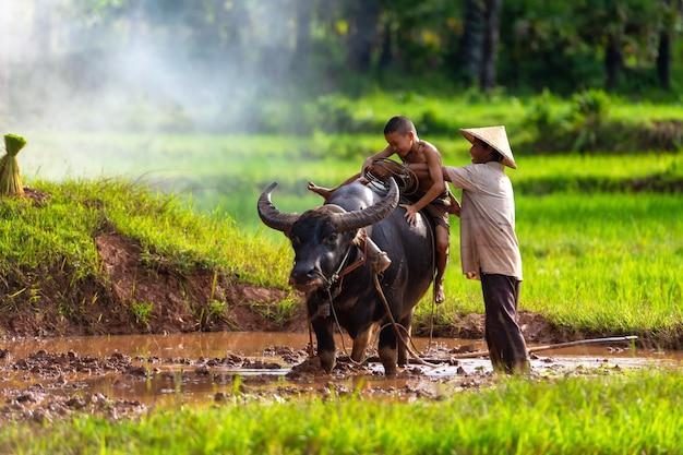 Vati und sohn das ist lebensstil des familienlandwirts in ländlichem asien.