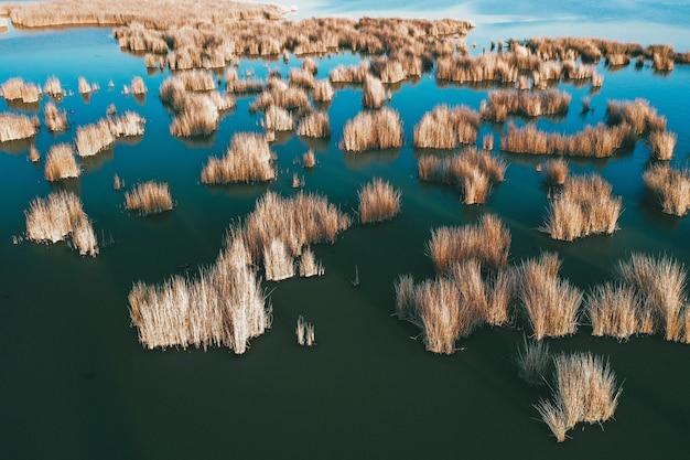 Vegetation am ufer des meeres