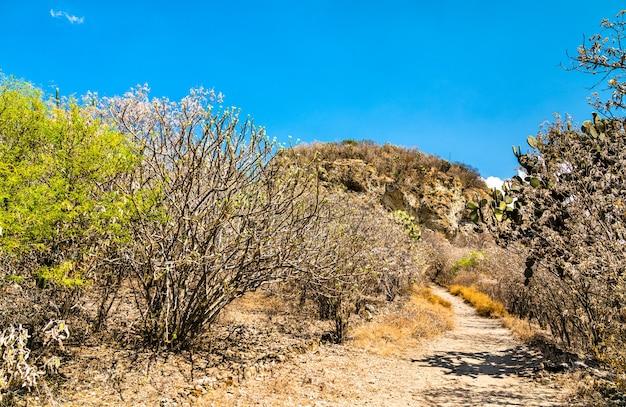 Vegetation an der archäologischen stätte yagul im mexikanischen bundesstaat oaxaca
