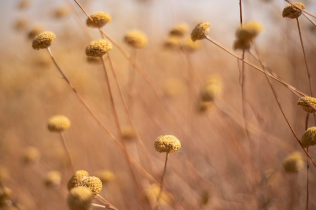 Vegetationshintergrund der wilden pflanzen im sommer