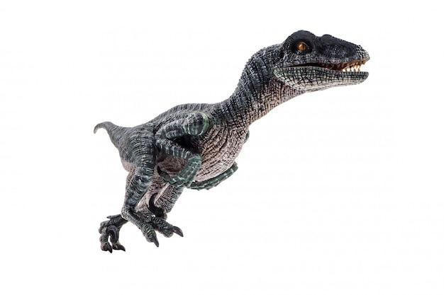 Velociraptor, dinosaurier auf weißem hintergrund