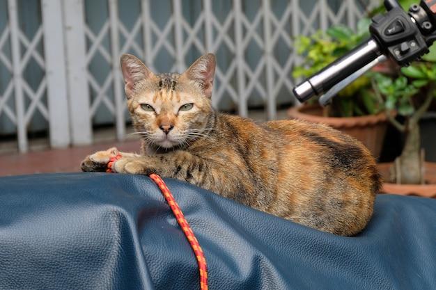 Verärgerte katze mit unglücklichem abschluss oben
