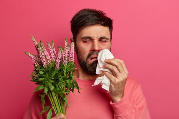 Verärgerter unzufriedener bärtiger mann schaut auf pflanze, die allergische reaktionen hervorruft, reibt und putzt nase mit taschentuch, posiert gegen rosa wand. saisonale allergie, symptome und krankheitskonzept