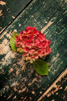 Verblassender rosa hortensienblumenkopf