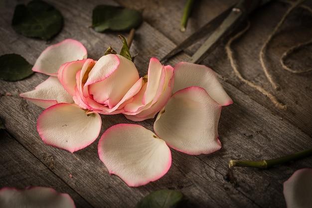 Verblichene rosa rose