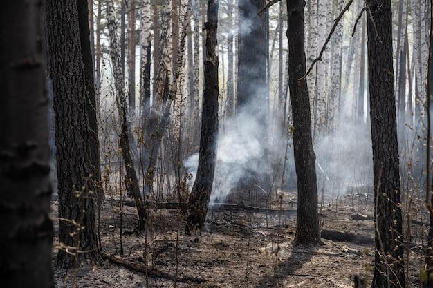Verbrannte bäume nach lauffeuer, umweltverschmutzung und viel rauch