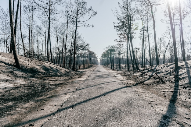 Verbrannter apokalypse-wald mit blasser asche auf dem boden