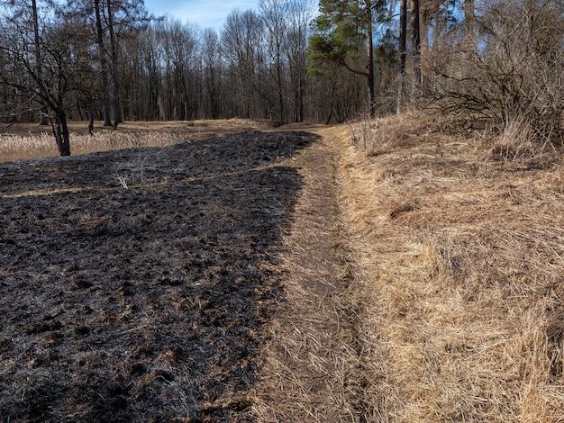 Verbranntes gras. ein feld mit verbranntem gras. absichtliche brandstiftung. die zerstörung von insekten. ökologisches desaster.