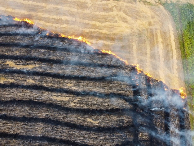 Verbranntes mähen von stroh auf dem feld, luftverschmutzung durch verbrennen von pflanzenresten, verbrennen von gras und zerstörung der natur