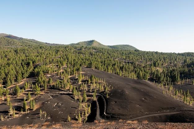 Verbreiteter wald, der auf vulkanischem boden wächst