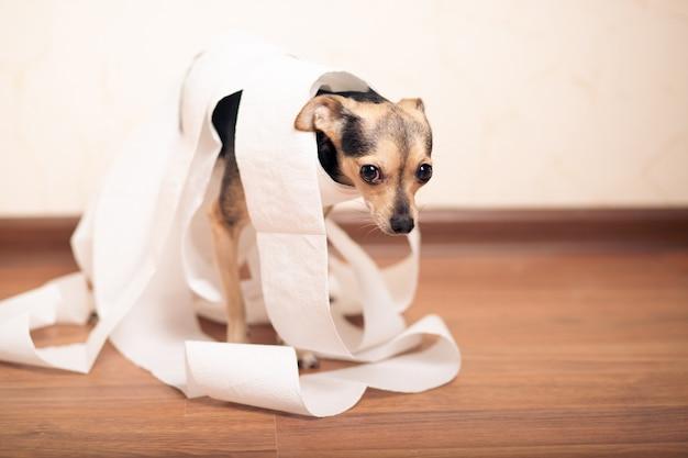 Verdauungsprobleme bei hunden, kleiner terrier in einem stapel papier