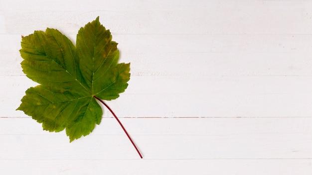 Vereinfachtes ahornblatt mit kopienraum
