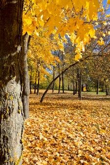 Vergilbte bäume